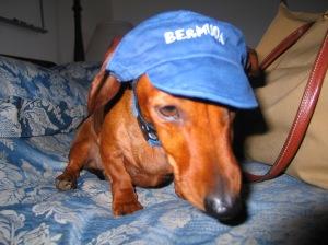 Piccolo w hat
