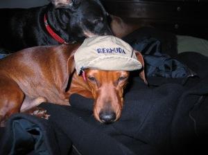 Piglet w hat